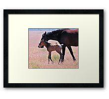 Newborn Foal Tests His Legs Framed Print