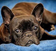 French Bulldog by Roger  Mackertich