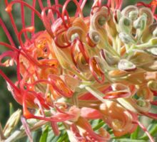 Grevillea Superb Sticker