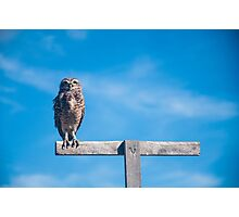 Owl in the sky Photographic Print