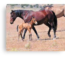 Desert Foal Canvas Print