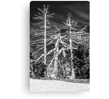 Crater Lake Sentinels Monochrome Canvas Print