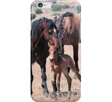 Newborn Foal Gets Groomed iPhone Case/Skin