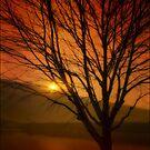 July Sunset by TOM YORK