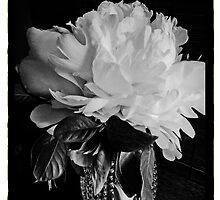 Barbara's Peony by Barbara Wyeth