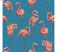Flamingos Photographic Print