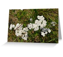 Small beautiful flowers in the grass. Greeting Card