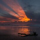 Flash - Yuraygir National Park - NSW Australia by Barbara Burkhardt