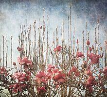 Spring Sky Line  by Kim-maree Clark