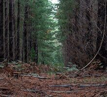Mount Macedon Forest by Elisabeth Thorn