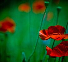 Vibrant red flowers in sea of green by Tim Scott