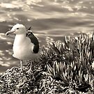 Seagull On The Seashore by K D Graves Photography