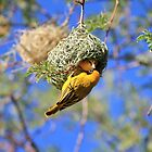 Masked Weaver - African Wild Birds - Home Shopping by LivingWild