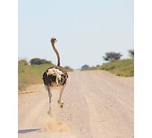 Ostrich - African Wild Birds - Road Runner Photographic Print
