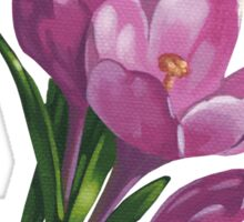 Pink crocuses - acrylic painting Sticker