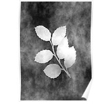 Black grunge leaves Poster