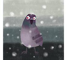 Angry Pigeon Photographic Print