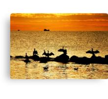Baltic Sea morning birds Canvas Print