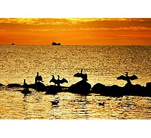Baltic Sea morning birds Photographic Print