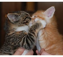 Kissing Kittens Photographic Print