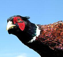 Pheasant by branko stanic