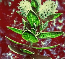 Floral Negatives by Vanessa  Warren