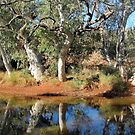Canning Stock Route. Western Australia-waterhole campsite by gillsart