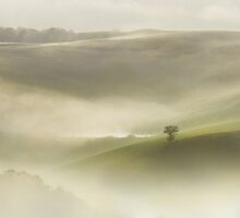 Lonely Tree in the morning fog by JBlaminsky