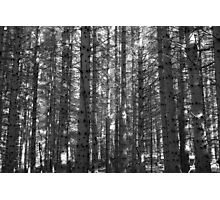 scolty woods Photographic Print