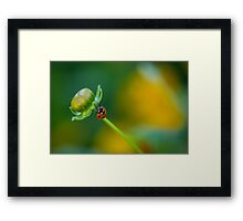 Early to the party Framed Print