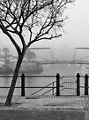 Misty morning by awefaul