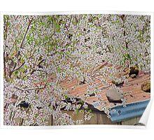 Spring in Lebanon Poster