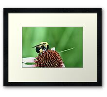 Pollen Collecting Framed Print