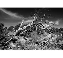 Dead Fall Photographic Print