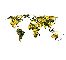 Rudbeckia World Photographic Print