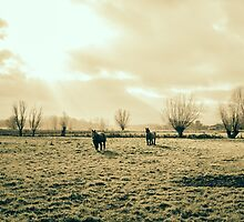 Draft Horses In A Pasture by PatiDesigns