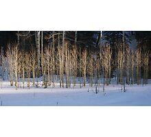 Winter Sunset On Aspen Photographic Print