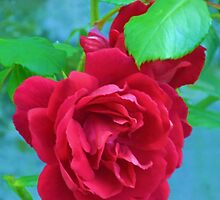 One Red Rose ........... by lynn carter
