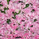 Pink Sweet Peas by Stephen Frost