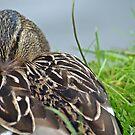 Duck - Billsborough by SophieGorner7