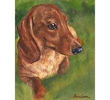 Red Dachshund Love Photographic Print