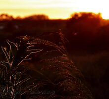 The reed bed by AderynValentine