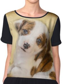 Cutest Puppy Mix Breed  Chiffon Top