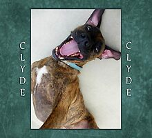 Clyde (3) by Lydia Marano