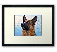 Gina - German Shepherd - dog photo gifts and apparel Framed Print