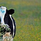 Cow- Billsborough by SophieGorner7