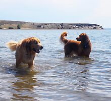 Teddy and Lily in the Lake by SarahJane221B