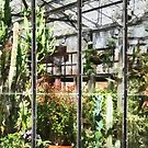 Greenhouse With Large Cactus by Susan Savad