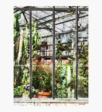 Greenhouse With Large Cactus Photographic Print