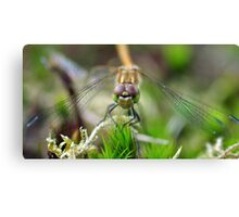 DARTER Canvas Print